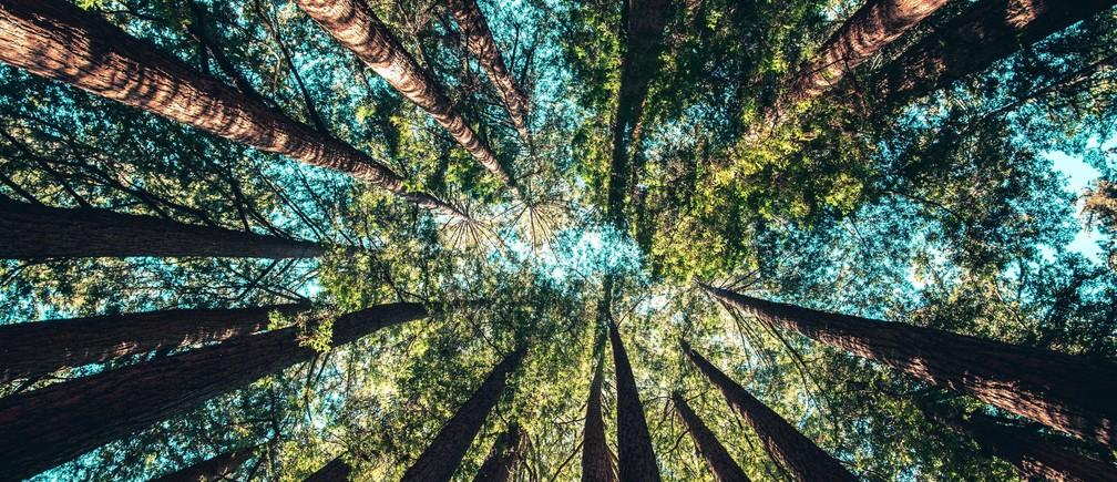 Duurzaam beleggen in de natuur